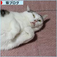 「優しい手としっぽ」本日発売されました!_a0389088_15013070.jpg