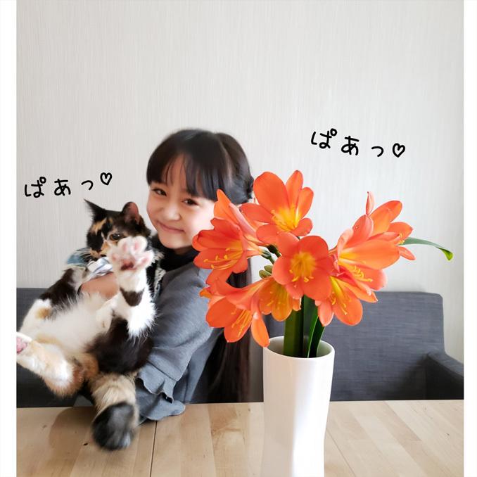 ドクター・スースの絵本/君子蘭/娘とお料理。_d0224894_03110814.jpg
