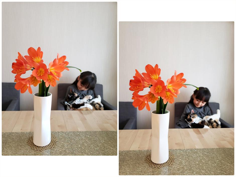 ドクター・スースの絵本/君子蘭/娘とお料理。_d0224894_03111179.jpg
