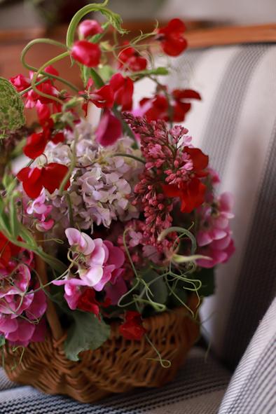 スイトピー祭り〜おうち時間に彩りを_b0208604_11520858.jpg