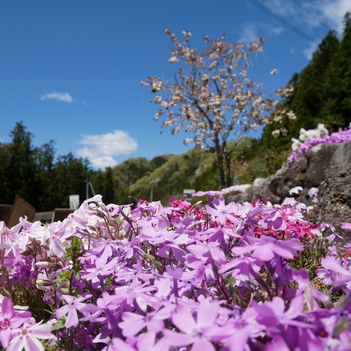春の庭_a0268412_22073611.jpg