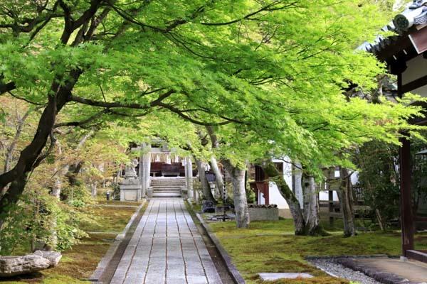 新緑の始まり2 光悦寺など_e0048413_20024426.jpg