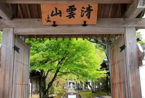 新緑の始まり2 光悦寺など_e0048413_20024911.jpg