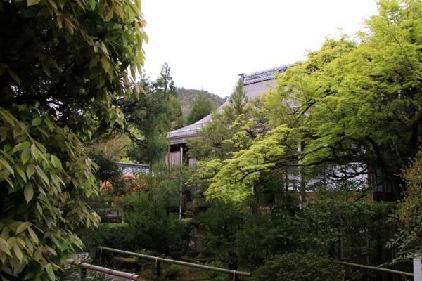 新緑の始まり2 光悦寺など_e0048413_20030514.jpg
