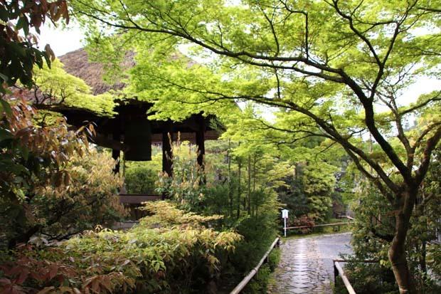 新緑の始まり2 光悦寺など_e0048413_20034806.jpg
