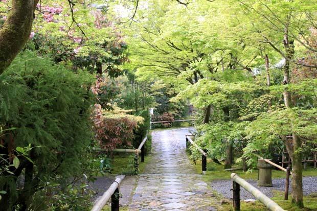 新緑の始まり2 光悦寺など_e0048413_20040870.jpg