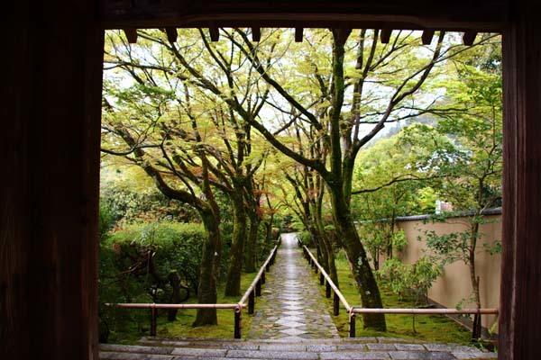 新緑の始まり2 光悦寺など_e0048413_20041392.jpg
