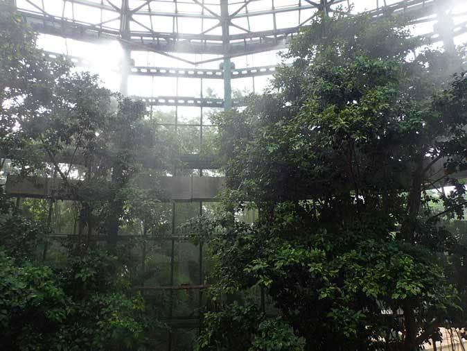 スコール!熱帯雨林は土砂降りに煙る(千葉市動物公園 June 2019)_b0355317_12103974.jpg