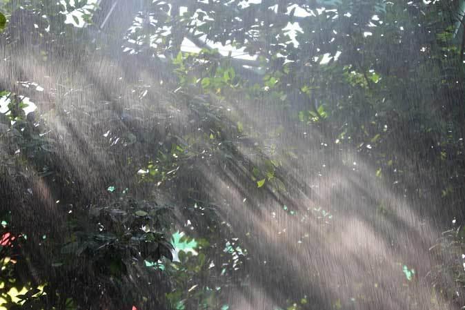 スコール!熱帯雨林は土砂降りに煙る(千葉市動物公園 June 2019)_b0355317_12182760.jpg
