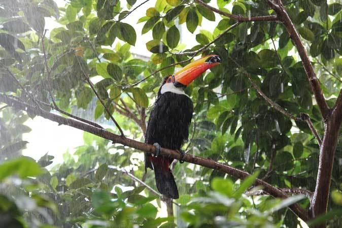 スコール!熱帯雨林は土砂降りに煙る(千葉市動物公園 June 2019)_b0355317_12215236.jpg