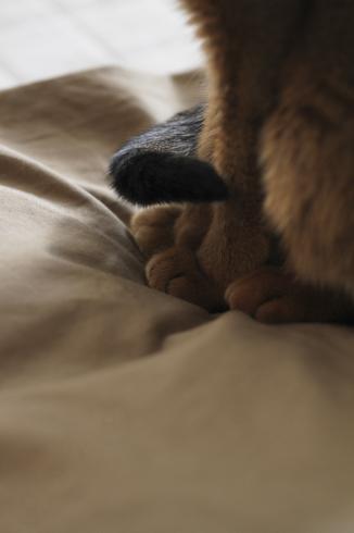 [猫的]同系色_e0090124_10031471.jpg