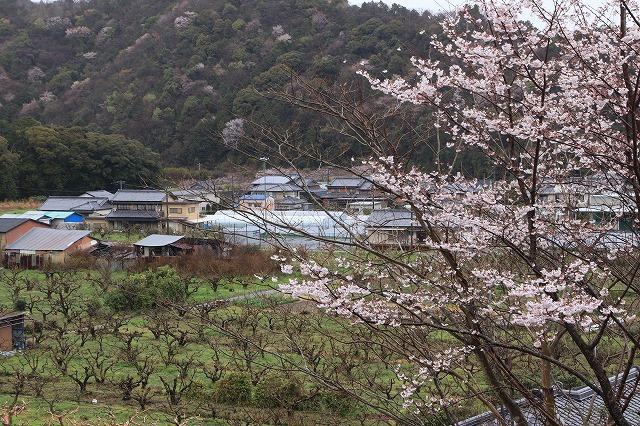 咢堂記念館への旅(撮影:3月29日)_e0321325_11081465.jpg