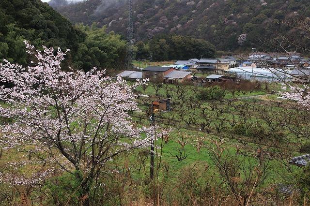 咢堂記念館への旅(撮影:3月29日)_e0321325_11085472.jpg