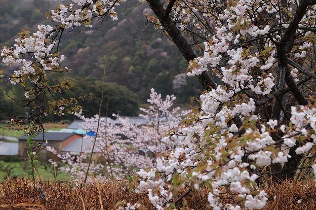 咢堂記念館への旅(撮影:3月29日)_e0321325_11090807.jpg