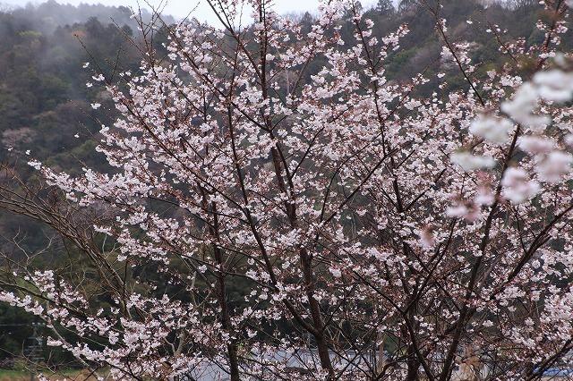 咢堂記念館への旅(撮影:3月29日)_e0321325_11092481.jpg