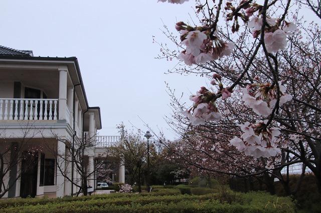咢堂記念館への旅(撮影:3月29日)_e0321325_11125577.jpg