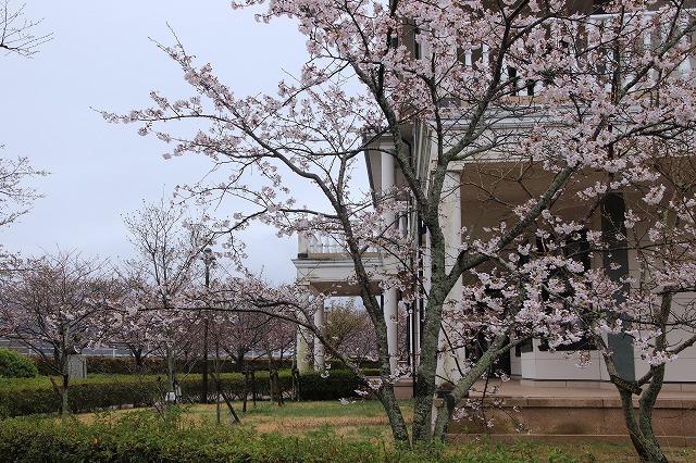 咢堂記念館への旅(撮影:3月29日)_e0321325_11133972.jpg