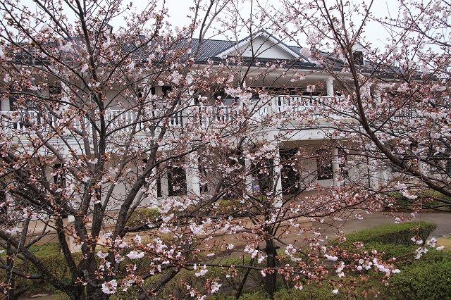 咢堂記念館への旅(撮影:3月29日)_e0321325_11140469.jpg