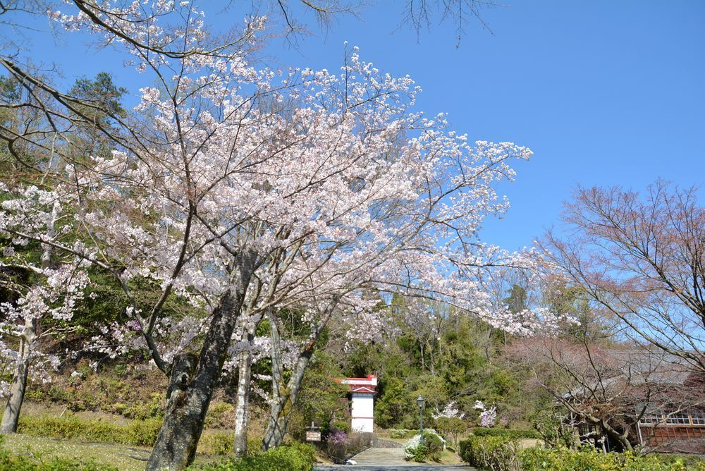 5丁目の桜_e0373930_20584502.jpg