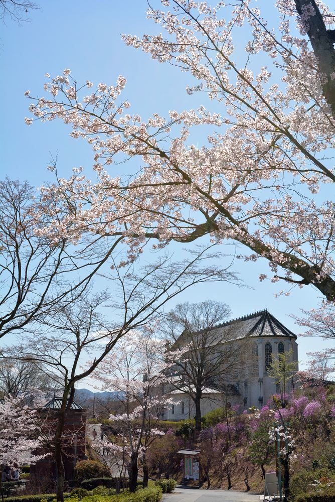5丁目の桜_e0373930_20584519.jpg