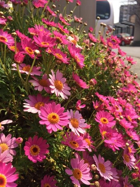 春はお花がたくさん✨_c0164348_15140263.jpeg
