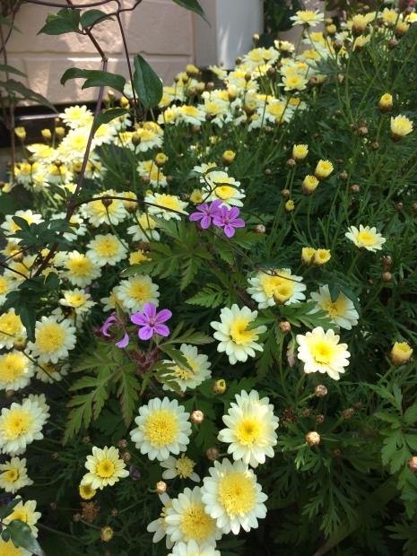 春はお花がたくさん✨_c0164348_15145734.jpeg