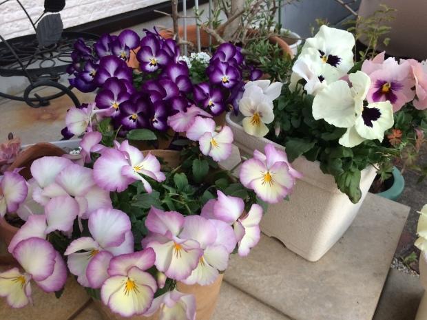 春はお花がたくさん✨_c0164348_15154282.jpeg
