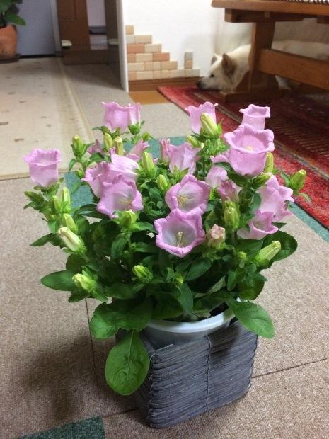 春はお花がたくさん✨_c0164348_15170034.jpeg