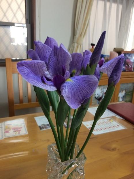 春はお花がたくさん✨_c0164348_15193327.jpeg