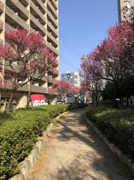 大森海岸~磐井神社の堀跡、ホテル街散策_d0250051_17400811.jpeg