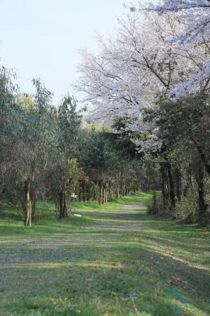 「うるおいの森」_f0185066_11022635.jpg