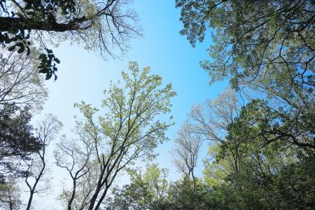 「うるおいの森」_f0185066_11023427.jpg