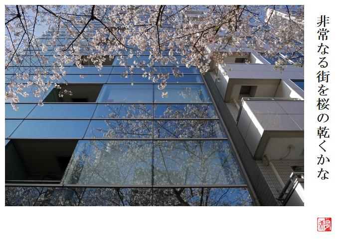 非常なる街を桜の乾くかな_a0248481_21314916.jpg