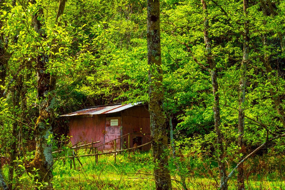 森の中の東屋_b0126495_20522557.jpg