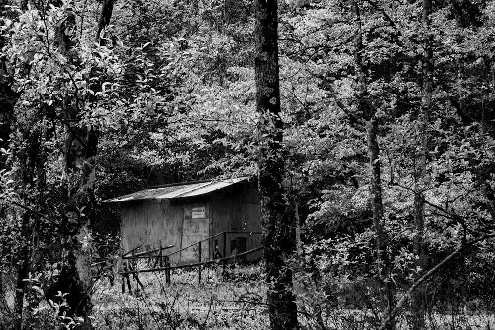 森の中の東屋_b0126495_20523206.jpg