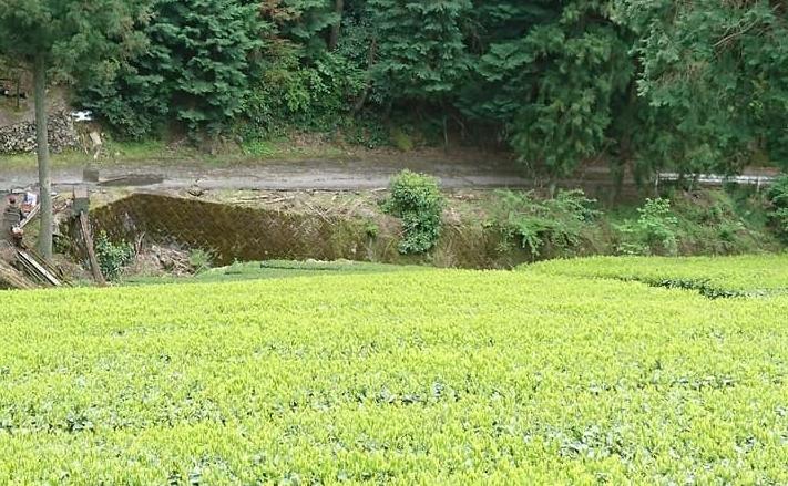コロナ渦中の茶工場掃除_b0028299_20562509.jpg