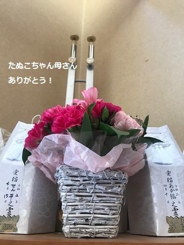 カイロ、お花、ありがとうございました!_f0242002_18321256.jpg