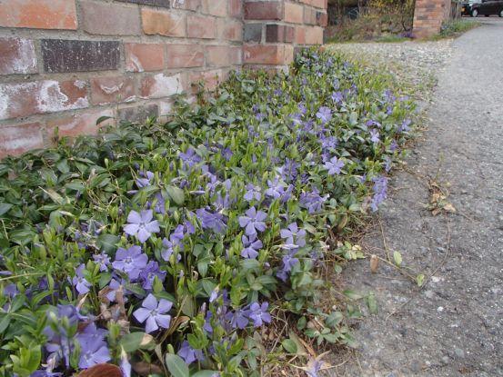 朝散歩コースの今と庭の花たち_f0064906_17041374.jpg