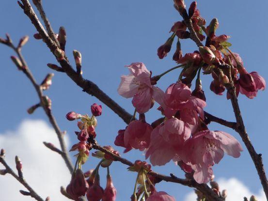 朝散歩コースの今と庭の花たち_f0064906_17042110.jpg