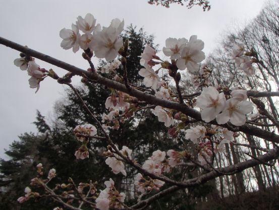 朝散歩コースの今と庭の花たち_f0064906_17043068.jpg