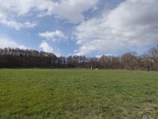 朝散歩コースの今と庭の花たち_f0064906_17044010.jpg