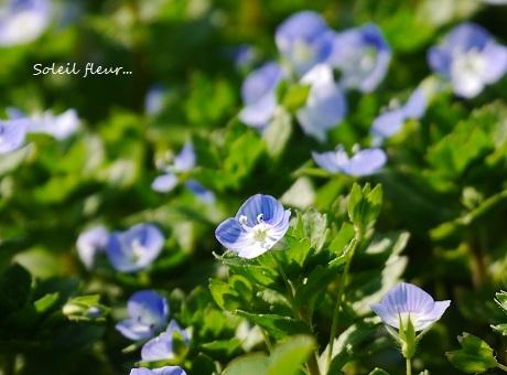 お部屋で、春の野を…♪_c0098807_19003320.jpg
