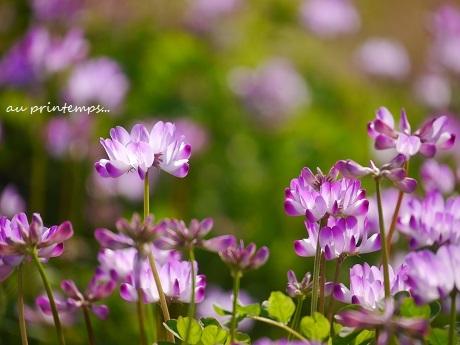 お部屋で、春の野を…♪_c0098807_21084417.jpg