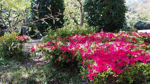 【お花に癒される】_f0215714_16341198.jpg