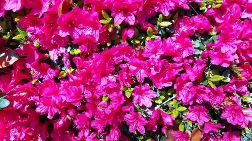 【お花に癒される】_f0215714_16341974.jpg