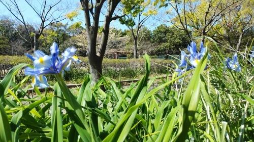 【お花に癒される】_f0215714_16344391.jpg