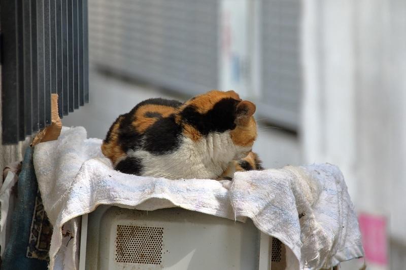 お猫様 _e0364223_21085486.jpg