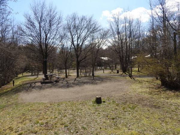 今週末の天気と気温(2020年4月23日)コブシが咲きました!_b0174425_22451976.jpg