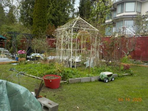 コロナ引きこもりのおかげで、庭がきれいになりました。_a0173527_07522481.jpg