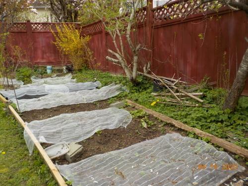 コロナ引きこもりのおかげで、庭がきれいになりました。_a0173527_07554011.jpg